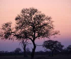 Tree in the evening Stock Photo 06