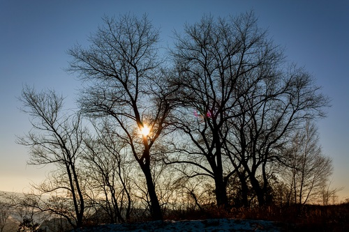 Tree in the evening Stock Photo 14