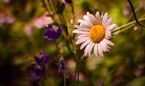 /Various blooming flowers Stock Photo 02