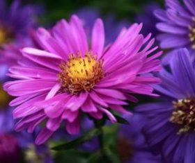 Various blooming flowers Stock Photo 10