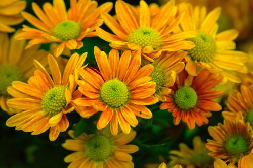 Various blooming flowers Stock Photo 11