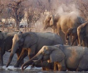 Wild elephant drinking water Stock Photo