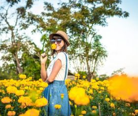 Woman in chrysanthemum field Stock Photo