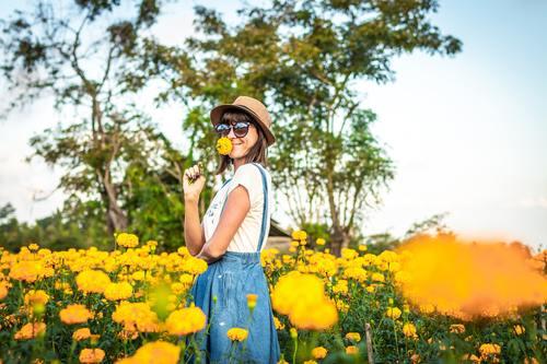 Woman in chrysanthemum field Stock Photo