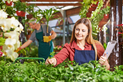 Woman managing plants in flower shed Stock Photo