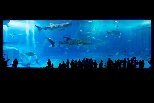 Wonderful aquarium Stock Photo 01