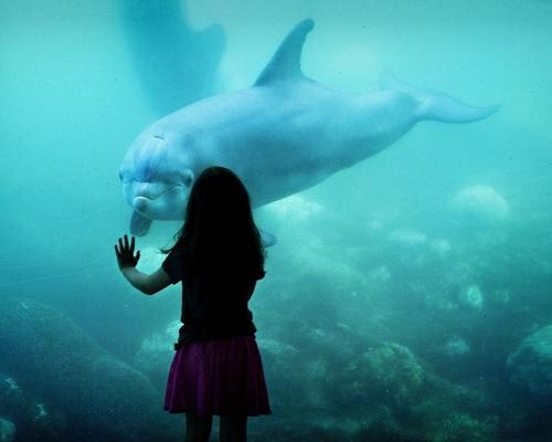Wonderful aquarium Stock Photo 02