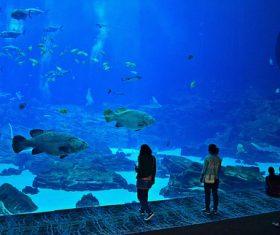 Wonderful aquarium Stock Photo 03