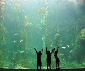 Wonderful aquarium Stock Photo 04