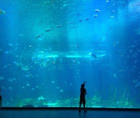 Wonderful aquarium Stock Photo 05