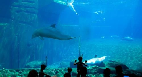 Wonderful aquarium Stock Photo 06
