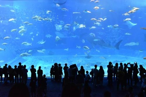 Wonderful aquarium Stock Photo 07
