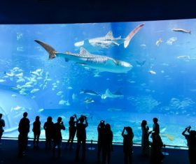 Wonderful aquarium Stock Photo 08
