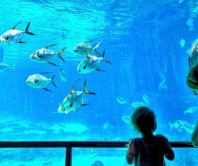 Wonderful aquarium Stock Photo 09