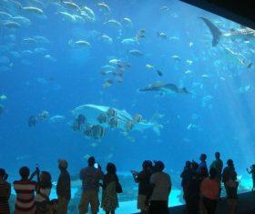 Wonderful aquarium Stock Photo 10