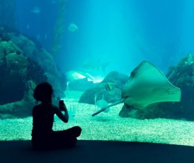 Wonderful aquarium Stock Photo 11