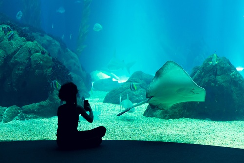 Wonderful aquarium Stock Photo 11