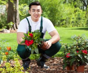 Young man planting flowers Stock Photo
