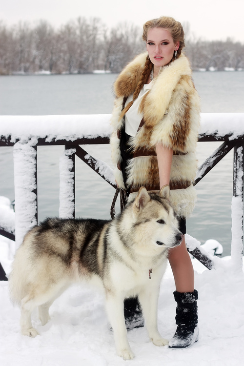 Young woman with wolf dog in snow Stock Photo 02