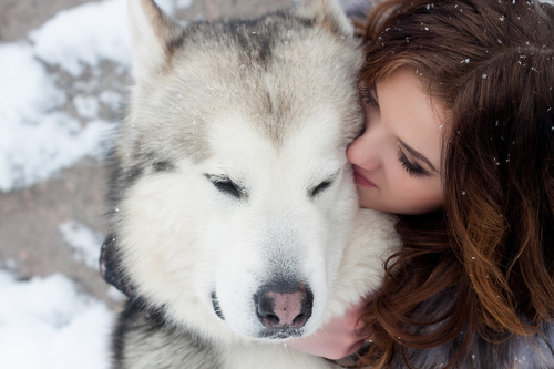 Young woman with wolf dog in snow Stock Photo 06