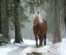 a brown wild horse in the forest Stock Photo