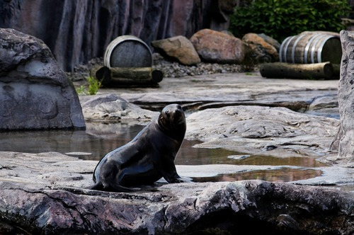 a lovely sea lions Stock Photo 01