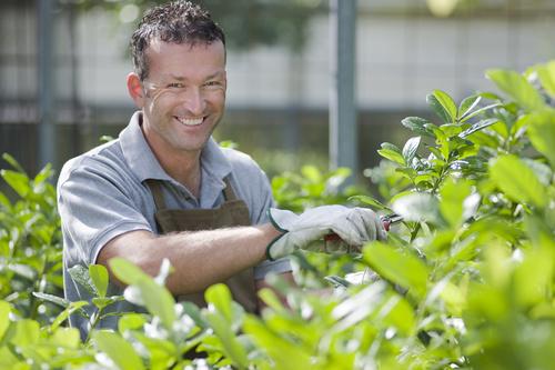 gardener garden landscaping Stock Photo 03