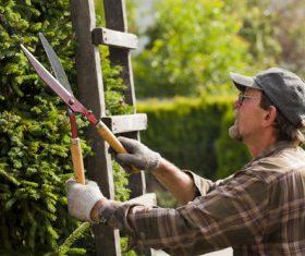 gardener garden landscaping Stock Photo 04