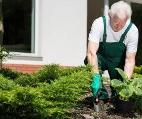 gardener garden landscaping Stock Photo 07