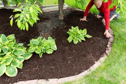 gardener garden landscaping Stock Photo 12