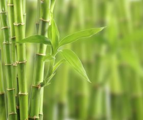 Bamboo leaves growing out of green leaves Stock Photo