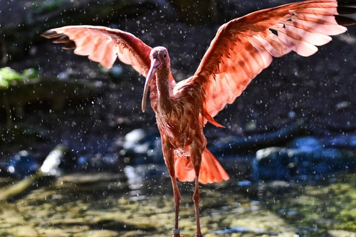Bird flapping its wings Stock Photo