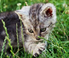 Cute grey kitten Stock Photo 01