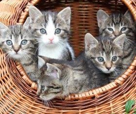 Cute grey kitten Stock Photo 02