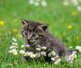 Cute grey kitten Stock Photo 03