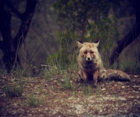 Fox sitting on the grass Stock Photo