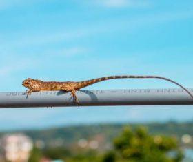Lizard on the railing Stock Photo