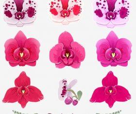 Orchid illustration vector