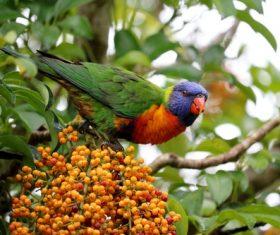 Parrot eating fruit Stock Photo