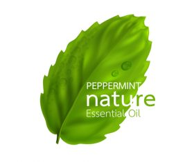 Peppermint essential oil vector background 01