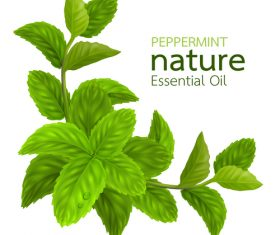 Peppermint essential oil vector background 02