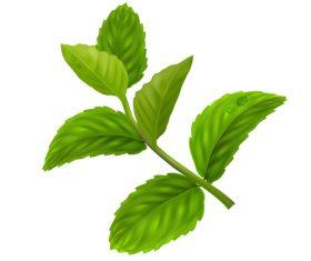 Peppermint green leaves illustration vector 02