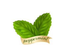 Peppermint green leaves illustration vector 04