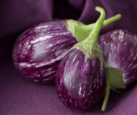 Purple eggplant Stock Photo 01