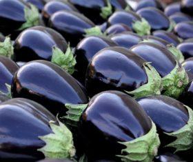 Purple eggplant Stock Photo 02