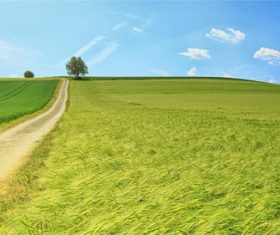 Stock Photo Vibrant green pastoral scenery 09