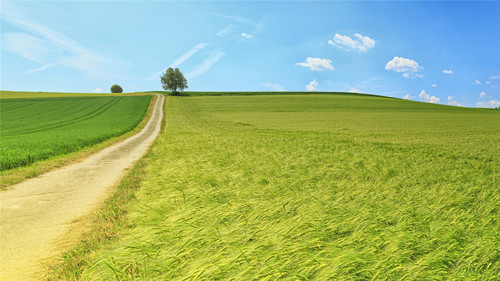 Stock Photo Vibrant green pastoral scenery 09