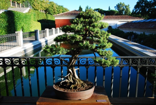 Various good looking bonsai Stock Photo 01