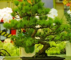 Various good looking bonsai Stock Photo 02