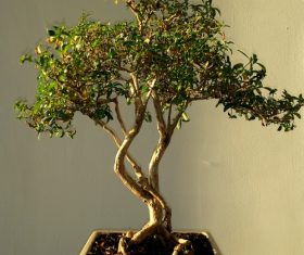 Various good looking bonsai Stock Photo 03